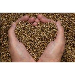 comprar semillas de marihuna